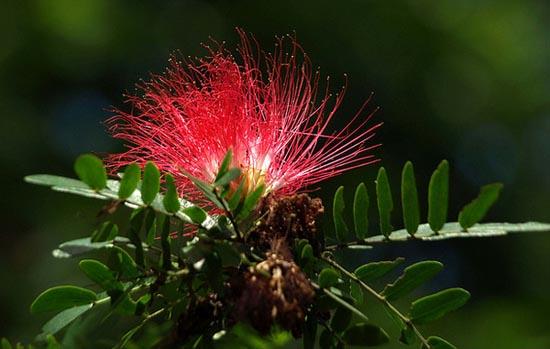 20 εκπληκτικά τροπικά λουλούδια απ' όλο τον κόσμο (4)