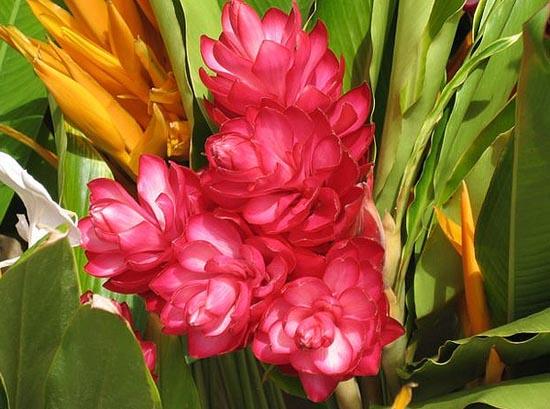 20 εκπληκτικά τροπικά λουλούδια απ' όλο τον κόσμο (6)
