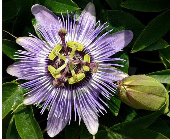 20 εκπληκτικά τροπικά λουλούδια απ' όλο τον κόσμο (18)