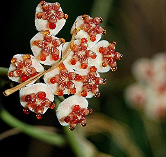 20 εκπληκτικά τροπικά λουλούδια απ' όλο τον κόσμο (20)