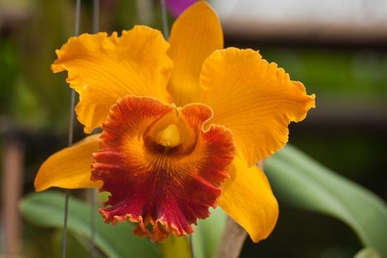 20 εκπληκτικά τροπικά λουλούδια απ' όλο τον κόσμο (11)