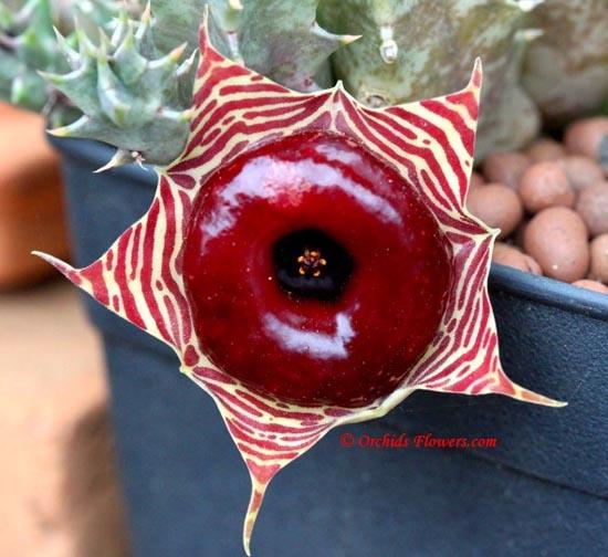 20 εκπληκτικά τροπικά λουλούδια απ' όλο τον κόσμο (12)