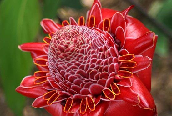 20 εκπληκτικά τροπικά λουλούδια απ' όλο τον κόσμο (10)