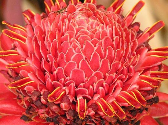20 εκπληκτικά τροπικά λουλούδια απ' όλο τον κόσμο (16)