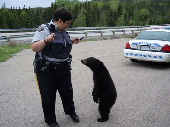 Ευθανασία σε αρκούδα επειδή ήταν υπερβολικά φιλική