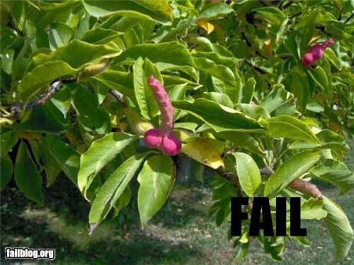 FAIL (17)