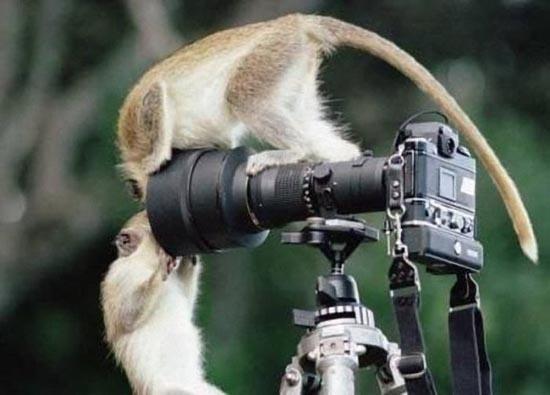 Φωτογράφοι σε αστείες στιγμές (9)