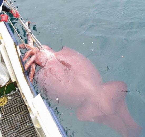 Τεράστια ζώα (2)