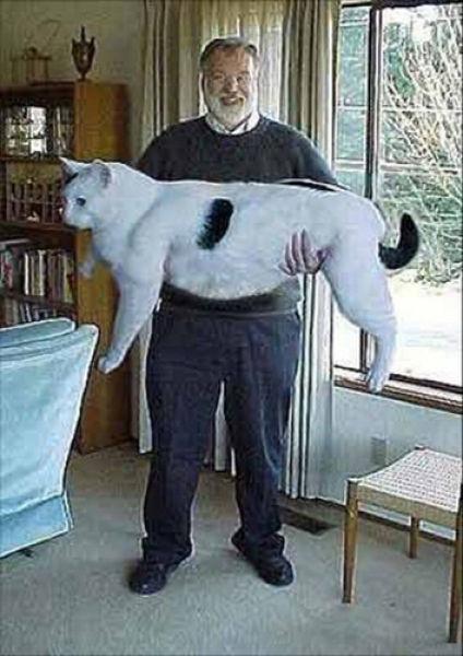 Τεράστια ζώα (10)