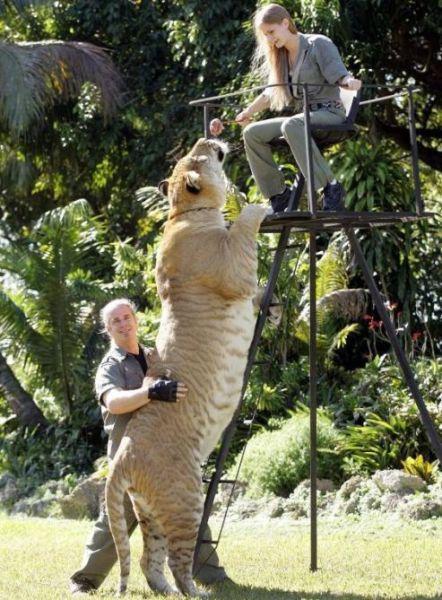 Τεράστια ζώα (26)