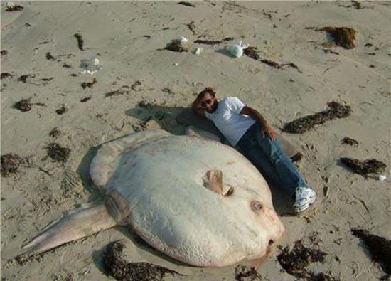 Τεράστια ζώα (27)