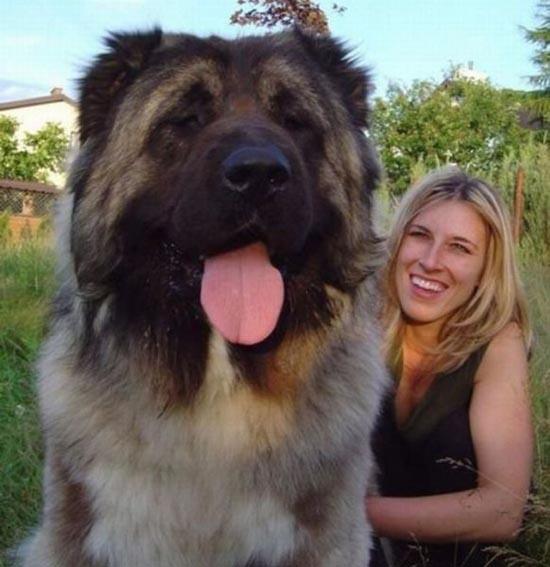 Τεράστια ζώα (33)