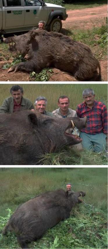 Τεράστια ζώα (35)
