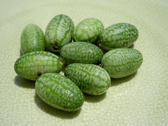 Το μικρότερο καρπούζι του κόσμου (5)