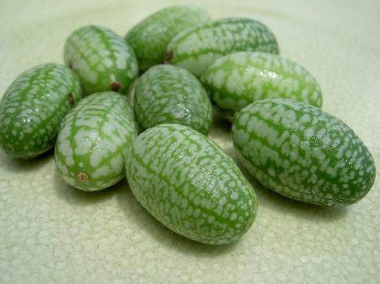 Το μικρότερο καρπούζι του κόσμου (4)