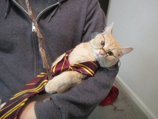 Φωτογραφία της ημέρας: Kitty Potter