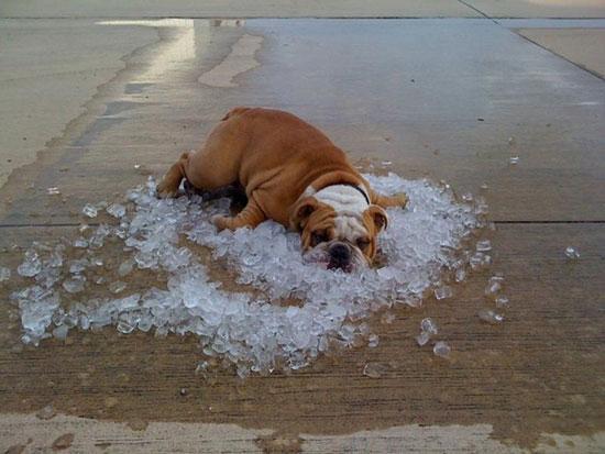 Φωτογραφία της ημέρας: Hot Dog στην κυριολεξία
