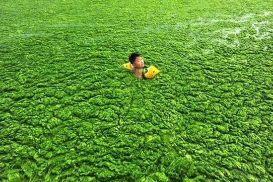 Κινέζικη παραλία έγινε καταπράσινη! (4)