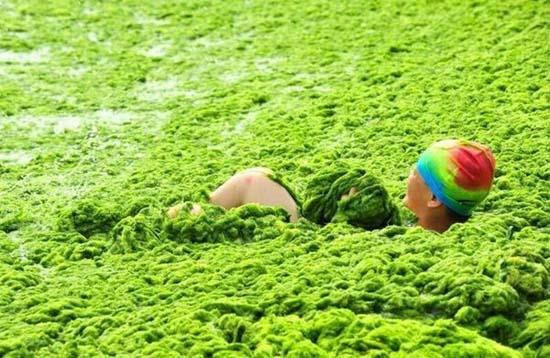 Κινέζικη παραλία έγινε καταπράσινη! (5)