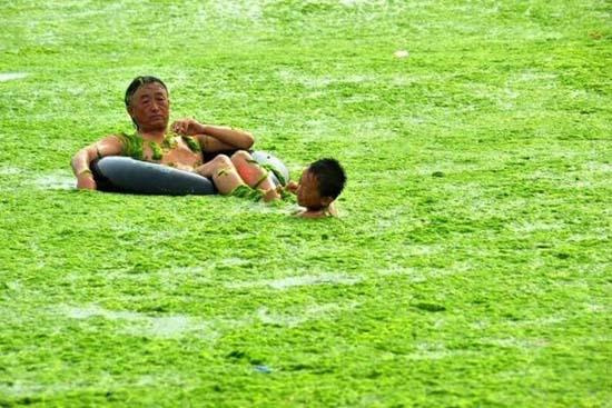 Κινέζικη παραλία έγινε καταπράσινη! (7)