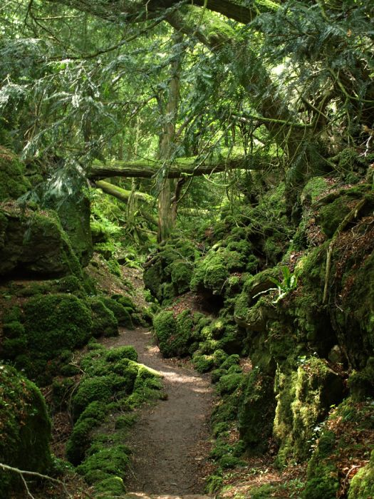Puzzlewood: Η έμπνευση του Tolkien για την Middle-earth (1)