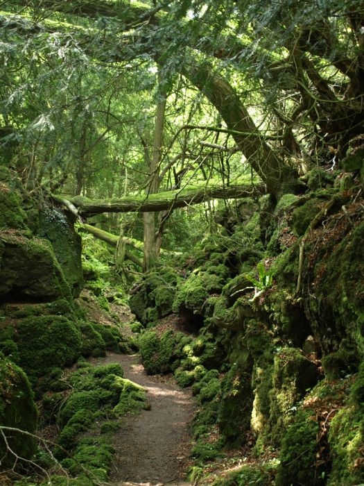 Puzzlewood: Η έμπνευση του Tolkien για την Middle-earth (2)