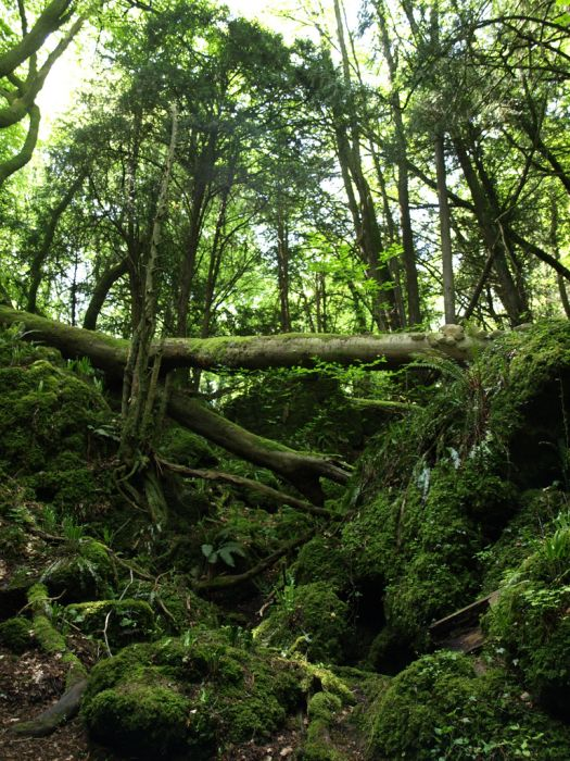 Puzzlewood: Η έμπνευση του Tolkien για την Middle-earth (3)