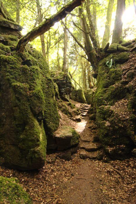 Puzzlewood: Η έμπνευση του Tolkien για την Middle-earth (4)