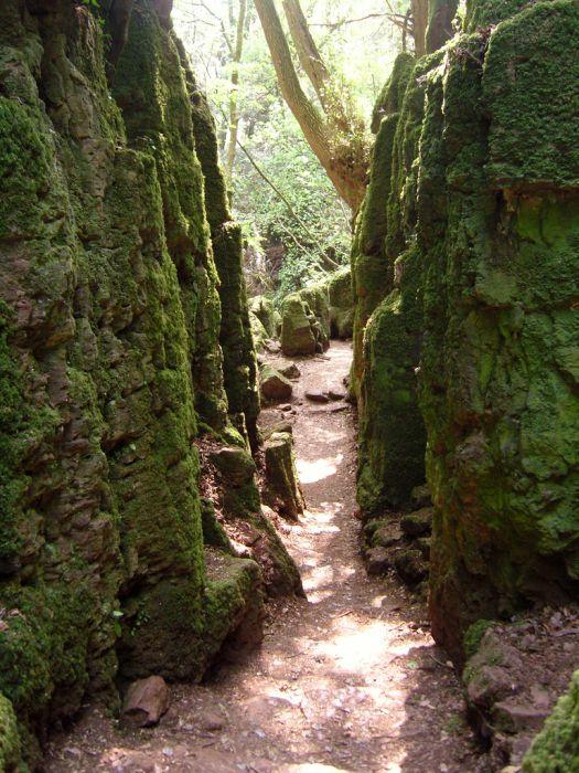 Puzzlewood: Η έμπνευση του Tolkien για την Middle-earth (5)
