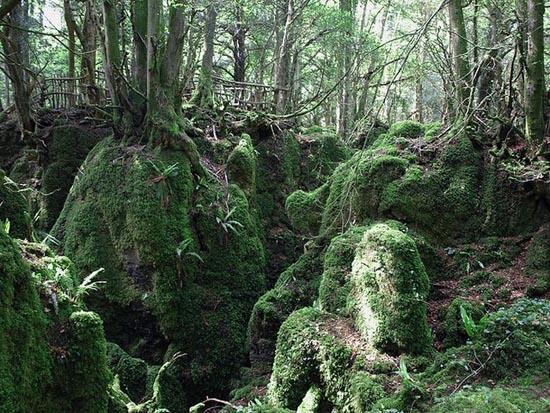 Puzzlewood: Η έμπνευση του Tolkien για την Middle-earth (6)