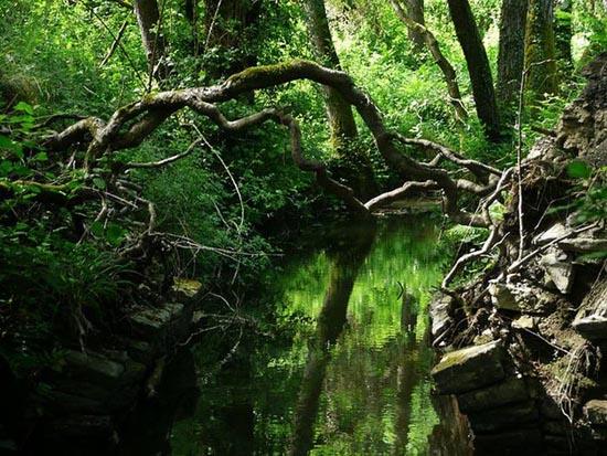 Puzzlewood: Η έμπνευση του Tolkien για την Middle-earth (7)
