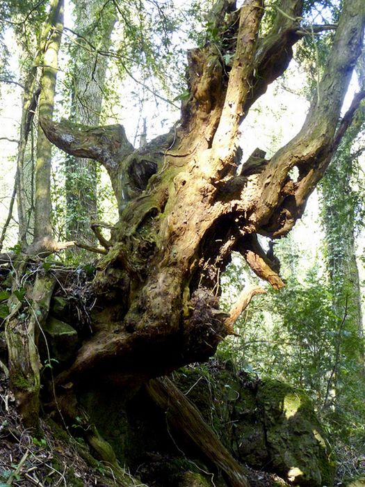 Puzzlewood: Η έμπνευση του Tolkien για την Middle-earth (9)