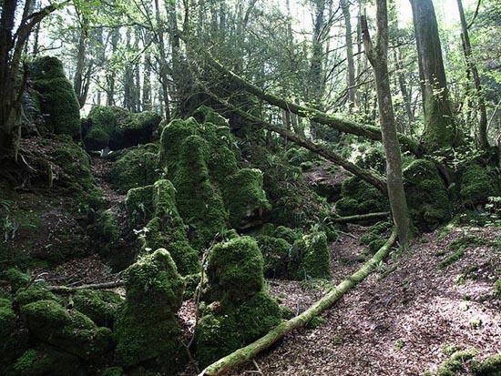 Puzzlewood: Η έμπνευση του Tolkien για την Middle-earth (12)