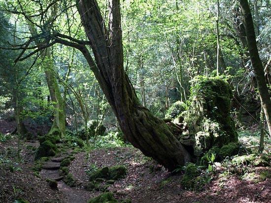 Puzzlewood: Η έμπνευση του Tolkien για την Middle-earth (13)