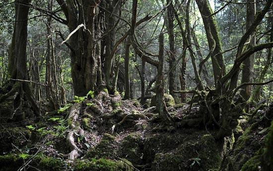 Puzzlewood: Η έμπνευση του Tolkien για την Middle-earth (14)