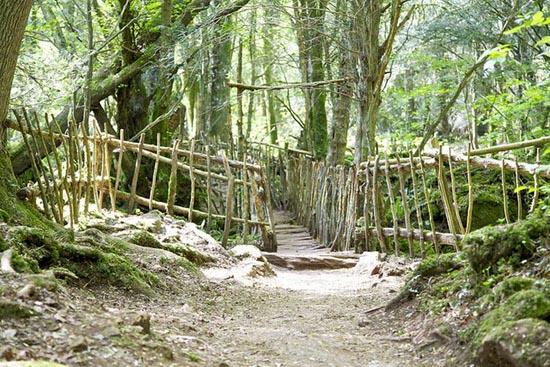 Puzzlewood: Η έμπνευση του Tolkien για την Middle-earth (16)