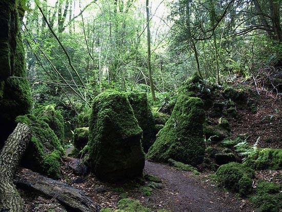 Puzzlewood: Η έμπνευση του Tolkien για την Middle-earth (18)