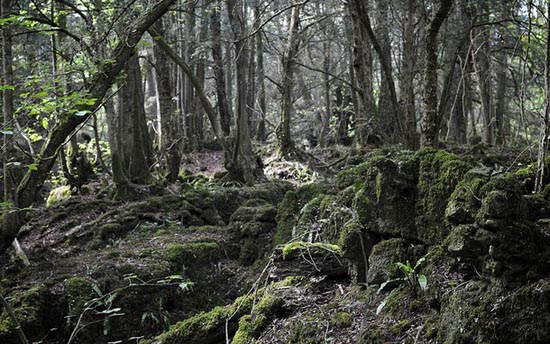 Puzzlewood: Η έμπνευση του Tolkien για την Middle-earth (20)