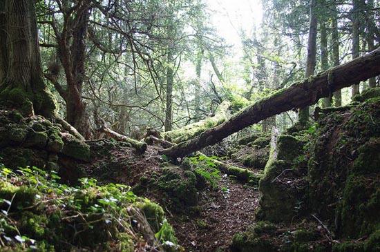 Puzzlewood: Η έμπνευση του Tolkien για την Middle-earth (21)