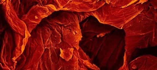 Τροφές κάτω από το μικροσκόπιο (6)