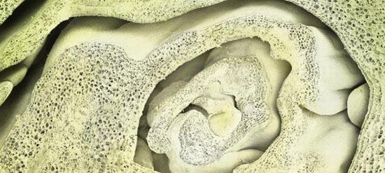 Τροφές κάτω από το μικροσκόπιο (16)