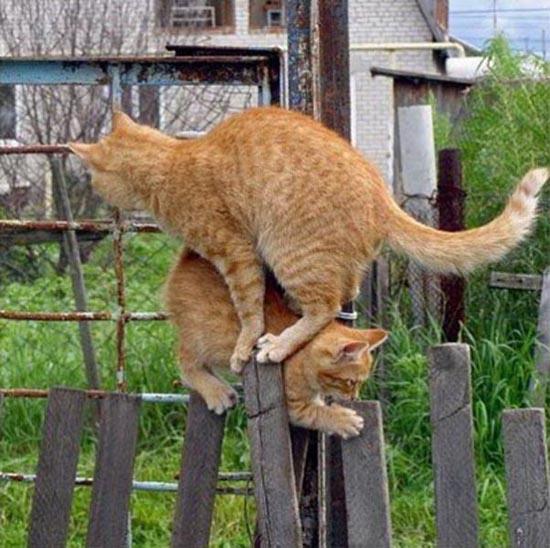 Δύο γάτες σε ένα φράχτη (2)