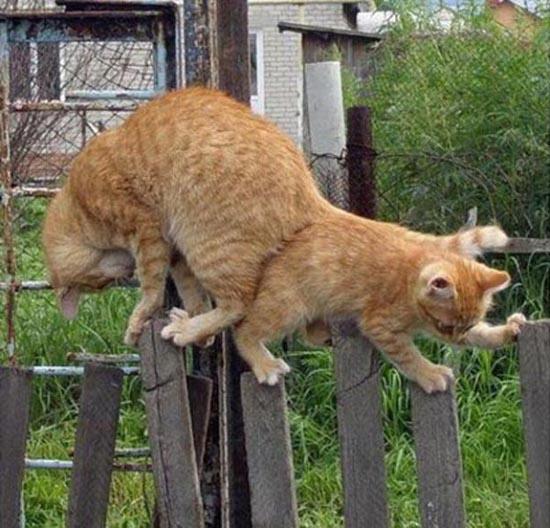 Δύο γάτες σε ένα φράχτη (3)