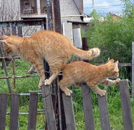 Δύο γάτες σε ένα φράχτη (4)