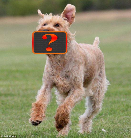 Αστείο παιχνίδι για σκύλους