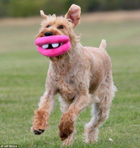 Μπορεί ο ίδιος ο σκύλος να μην