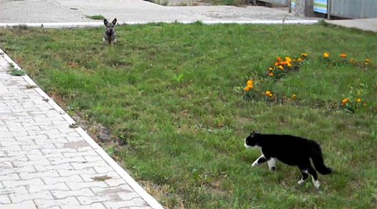Επική μονομαχία σκύλου και γάτας
