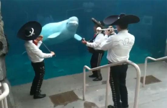 Καντάδα σε μια φάλαινα