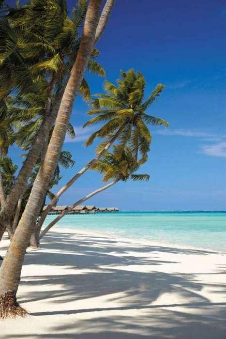 Μαλδίβες (16)
