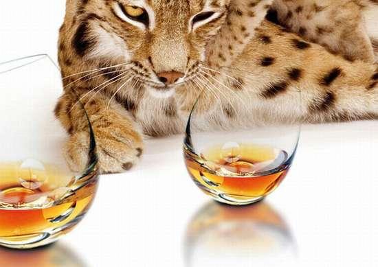 Παράξενα και εντυπωσιακά ποτήριαΠαράξενα και εντυπωσιακά ποτήρια (11)